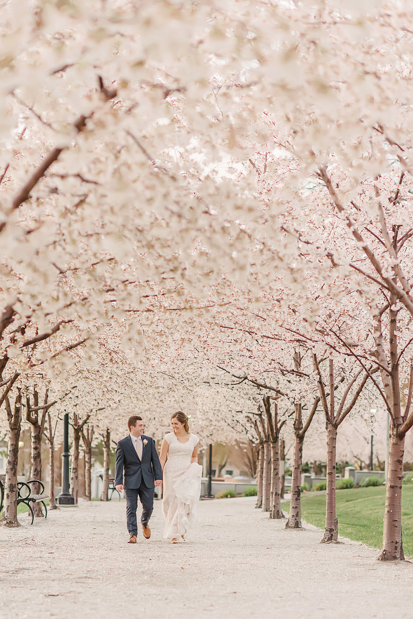 Cherry blossoms wedding photos